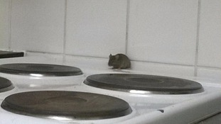 A mouse on the cooker