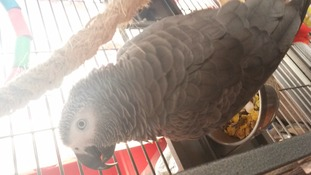 Missing parrot has been reunited with its owners in Wallingford