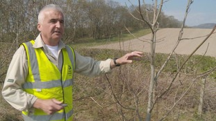 Steve Morgan has been tasked with recording instances of Ash Dieback in the region.