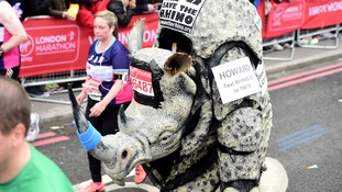 Somehow someone let a rhino run the marathon