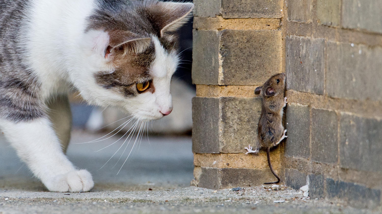 кошка ловит