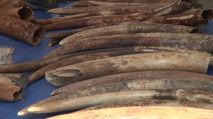 Three tons of elephant tusks smuggled from Kenya seized in Thailand
