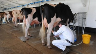 Dairy farmers protest over cuts to payments