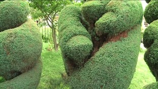 Rude finger shaped bush lands gardener in trouble