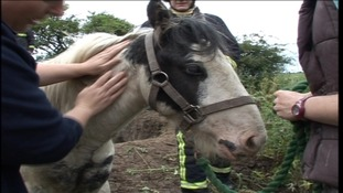 Dramatic horse rescue