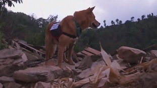 Yumenosuke helps sift through wreckage in Nepal