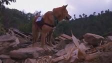 Yumenosuke helps sift through wreckage in Nepal