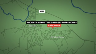An ancient elm tree has fallen on to three homes in Suffolk.