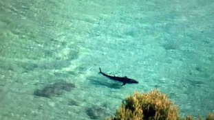Mysterious 'great white shark' spotted near the Magaluf coast