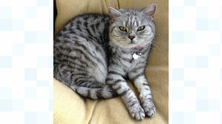 Wilma the tabby cat was shot and killed by an air rifle.