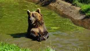 Bear Whipsnade