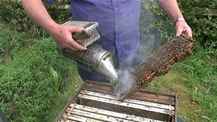 The number of bee hives in London has doubled in recent years
