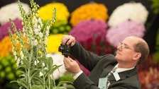 Royal Horticulture Society is gearing up for visitors to the famous flower show