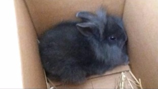 Radio hosts spark outrage for killing baby rabbit with a bicycle pump live on air