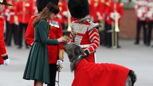 The Duchess of Cambridge hands a sprig of shamrock to an Irish wolfhound