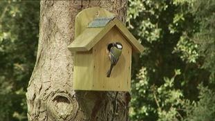 The bird house.