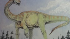 The fossil of the sauropod,dates back to the Jurassic period