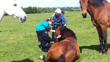The sanctuary works with children with learning disabilities to help them feel more confident around animals.