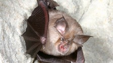 Future of Devon bats to be decided at High Court
