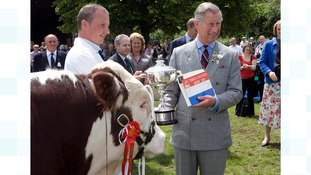 Prince Charles, Prince of Wales watches the judging of Hereford Bulls at the Three Counties Show in Malvern, Worcestershire.