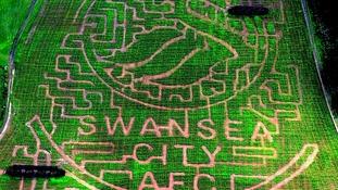 Swansea City maize maze