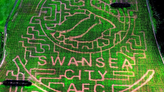 Swansea City maize maze