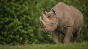 World's rhino experts to meet at Chester Zoo