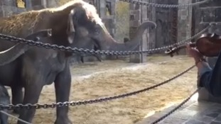 Video shows elephants 'dance' as they enjoy classical music concert