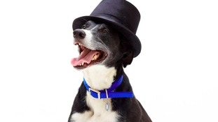 Hot to trot: abandoned dogs show off their Royal Ascot style