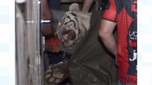 Police with the white tiger killed by officers in Tbilisi