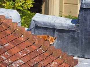 fox castle