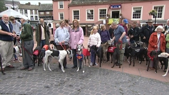 Adopted greyhounds in Carlisle