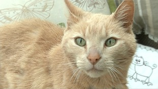 'Ozzie' the globe-trotting missing moggie to be reunited with his owners