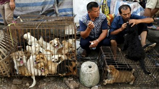 Dogs are packed into cages, ready to sell