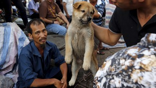 Vendors haggle for a price on one of the puppies