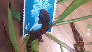 Gecko on a stamp