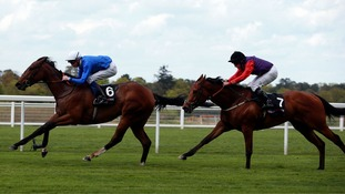 Racehorses are reaching ever-faster speeds, the study found