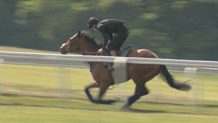 A survey suggest the speeds achieved by racehorses is increasing.
