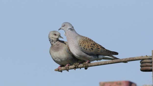 DOVE_for_web