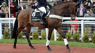 Legendary racehorse Kauto Star put down after fall