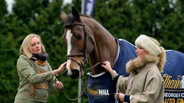 Retired racehorse Kauto Star is put down