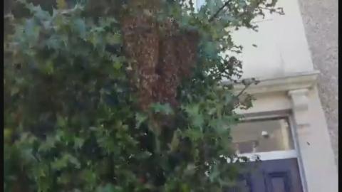 Bee_swarm_better