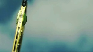 Spectacular slo-mo reveals how tennis ball virtually disintegrates when hit at high speed