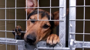 The council is urging people to contact them about stray dogs.