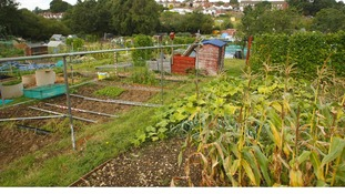 Allotments are growing in popularity