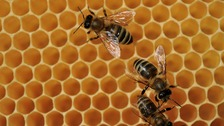 What would a world without bees look like?