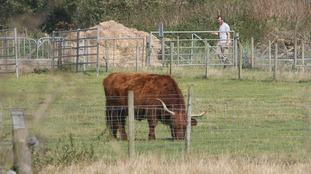 Read the NFU's tips on handling livestock safely.