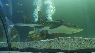 Fish returned to Sealife Centre 25 years later