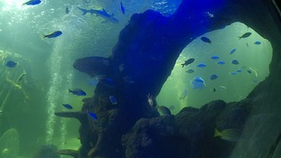 There are more than 1,000 creatures at the Sealife Centre.