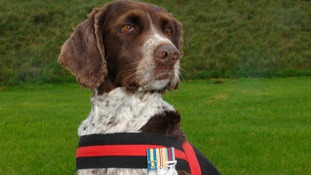 Buster, seen here wearing his medals, has died after tours of Afghanistan, Bosnia and Iraq.